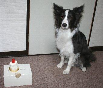 誕生日ケーキと記念撮影する犬