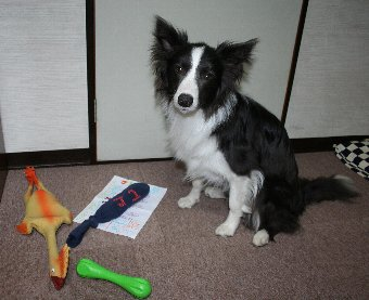 誕生日プレゼントをもらった犬