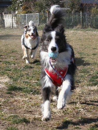 追いかけっこする犬達