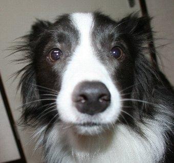 びっくり顔の犬