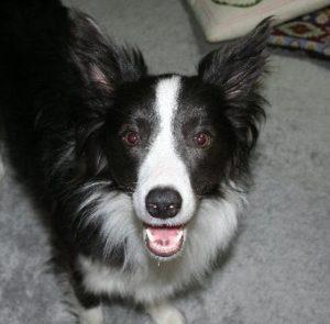 久しぶりに会えてウキウキな犬