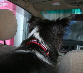 洗車機体験中の犬
