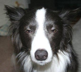 悪そうな顔の犬