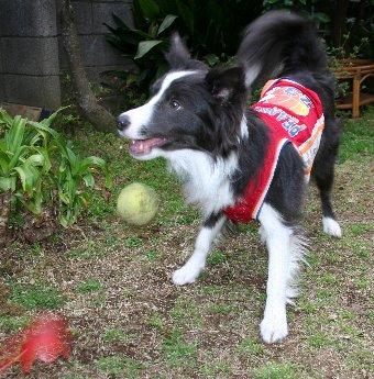 ボールを放した瞬間の犬の顔
