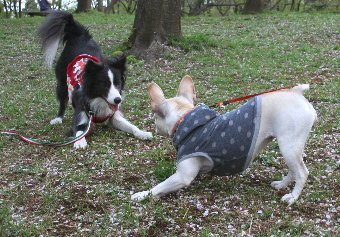 お互い遊ぼうポーズの犬