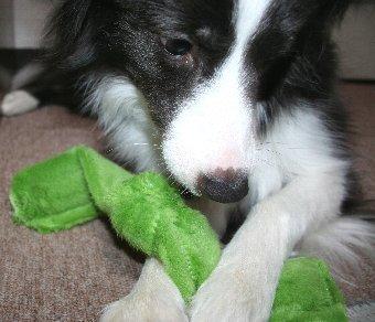 シャンプーしてきれいになった犬の足