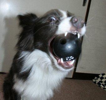 すごい顔でボールキャッチする犬