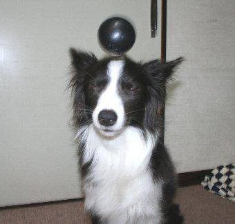 犬のヘディング写真