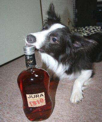ウィスキーボトルをいたずらしようとする犬