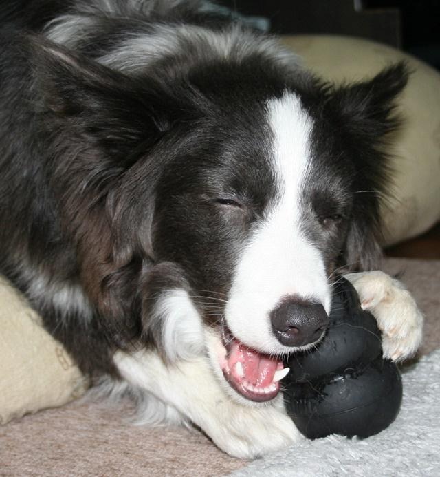 ブラックコングで遊ぶ犬